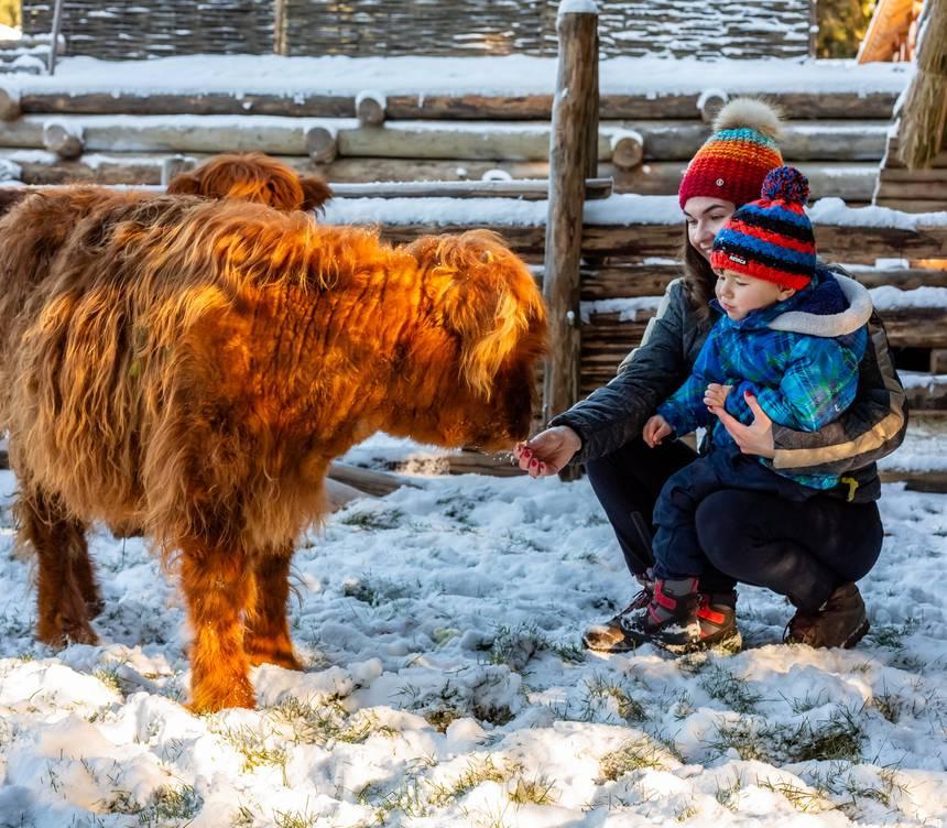 Етнопарк «Гуцул Ленд», Зимові розваги - Буковель. Гірськолижний та SPA курорт в Карпатах